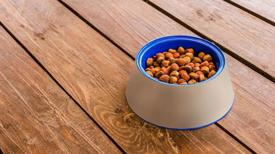 Best Automatic Pet Feeders