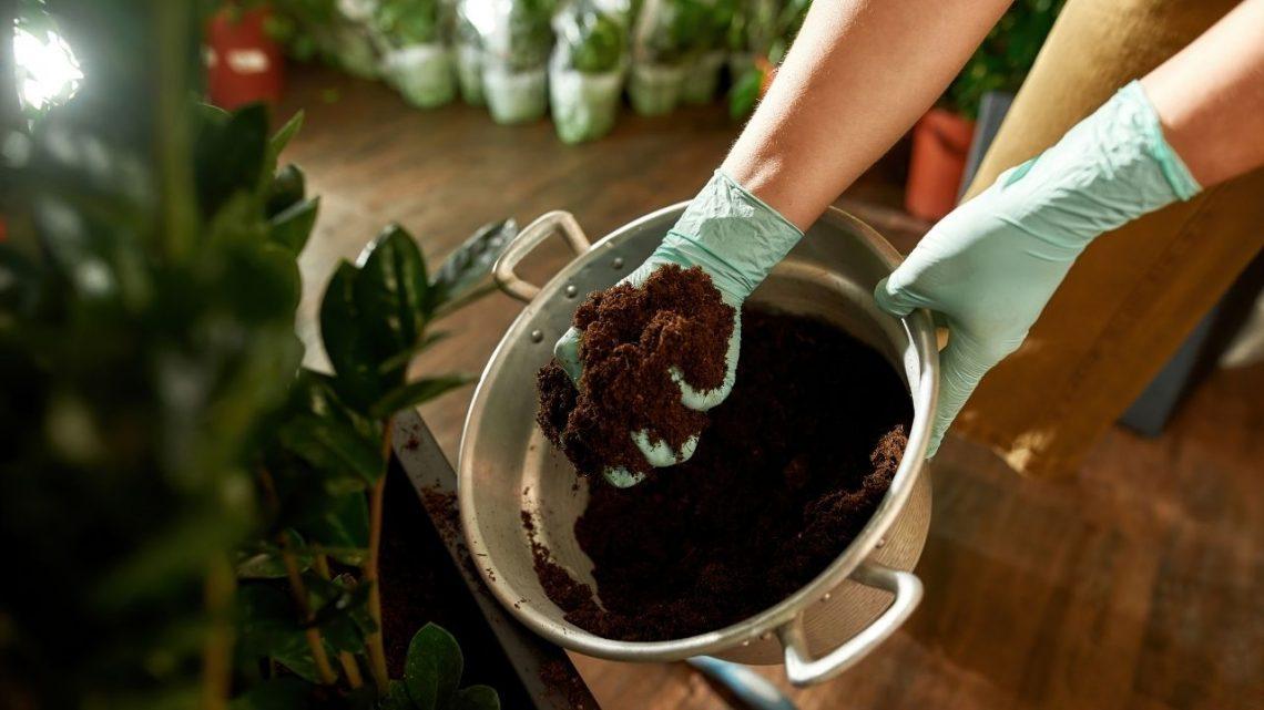 Best Quality Soil